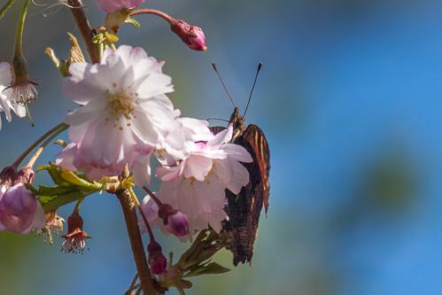 8fa05eda108 Koude lente, maar wespen en bijen weer aanwezig - Haagsallerlei